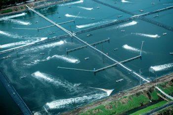 Aqua Farming